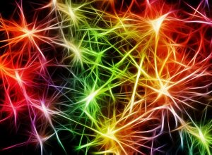 The Power Of The Mirror Neurons System blog image